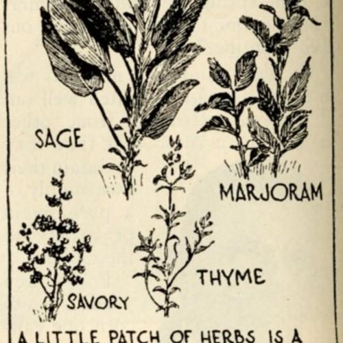 herbs illustration.jpg