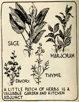 Illustration of several varieties of herbs